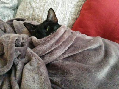So sieht das Deckenpaket bei einer Katze aus