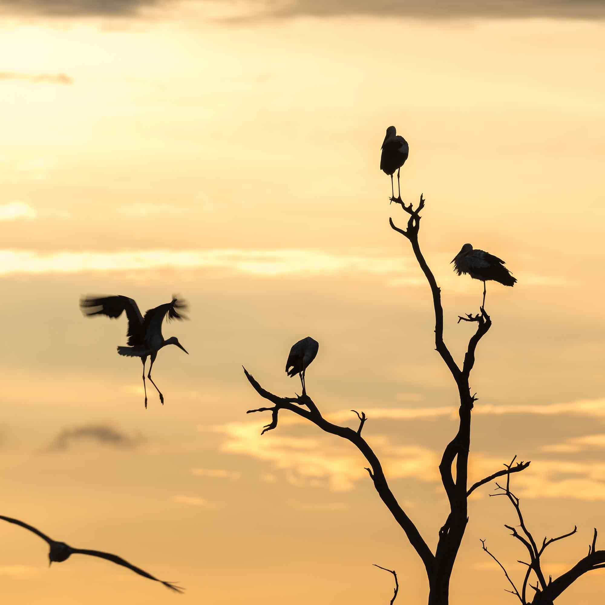Vögel fliegen nach Hause in ihr Nest