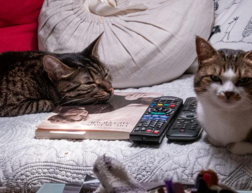 Seelenfutter: Ein kleiner Katzenfilm