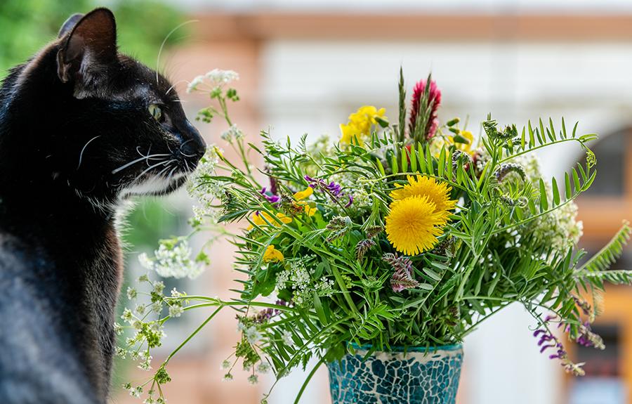 Die Katze erfreut sich an den Blumen.