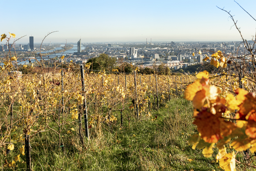 Den Ausblick über Wien mit allen Sinnen fühlen.